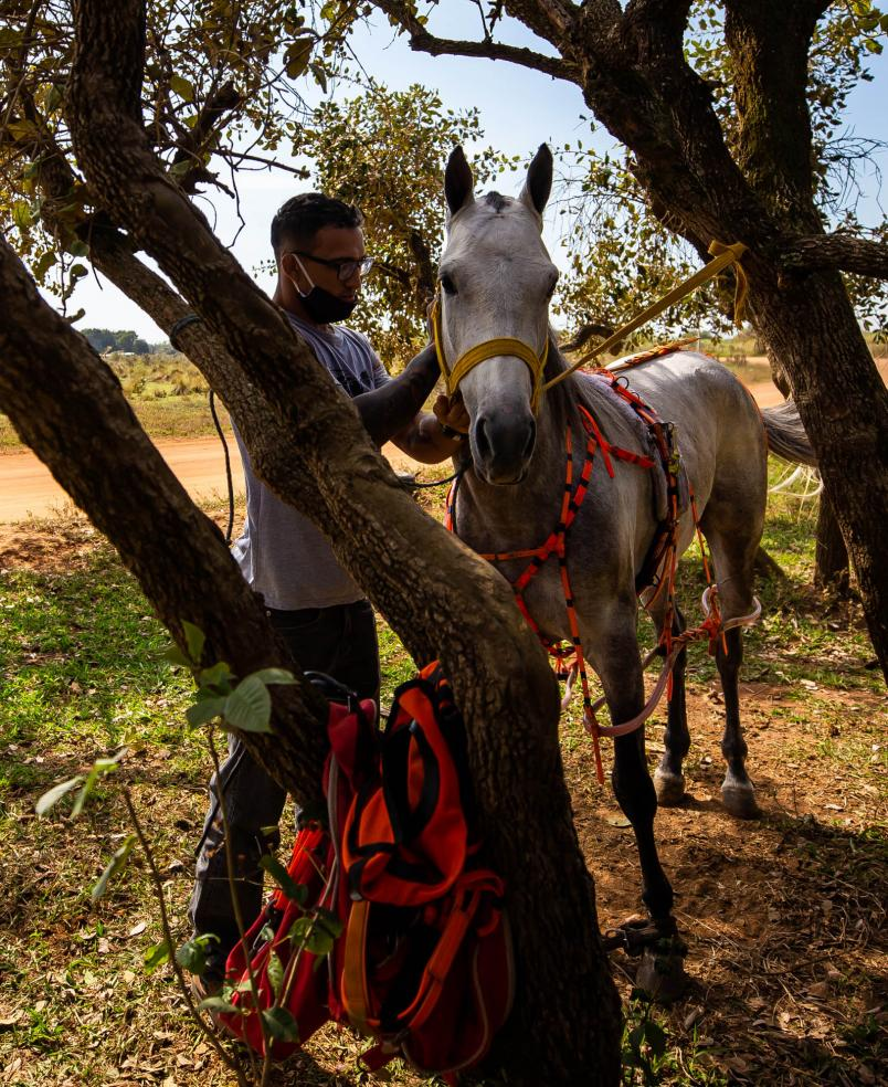 """Charles """"do Bronx"""" Oliveira takes care of one of his horses on July 11, 2020, (Photo by Buda Mendes/Getty Images)"""
